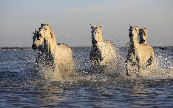 Equestrian clubs